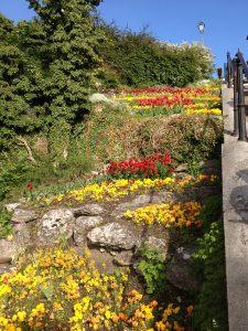 Flora på Gotland